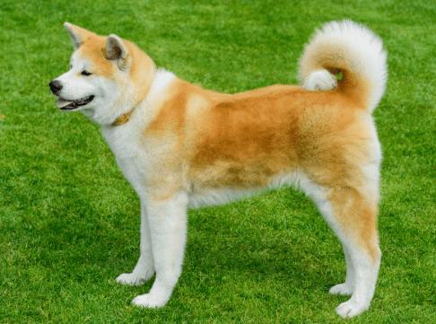 Dog dander remover