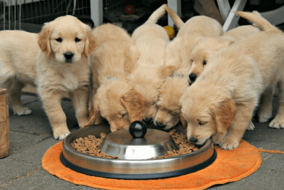 is wet dog food bad to puppies