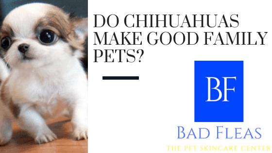 Do Chihuahuas make good family pets