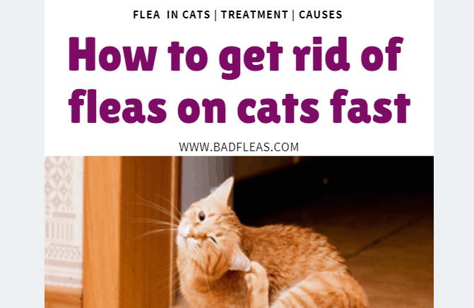 FLEA TREATMENT ON CATS