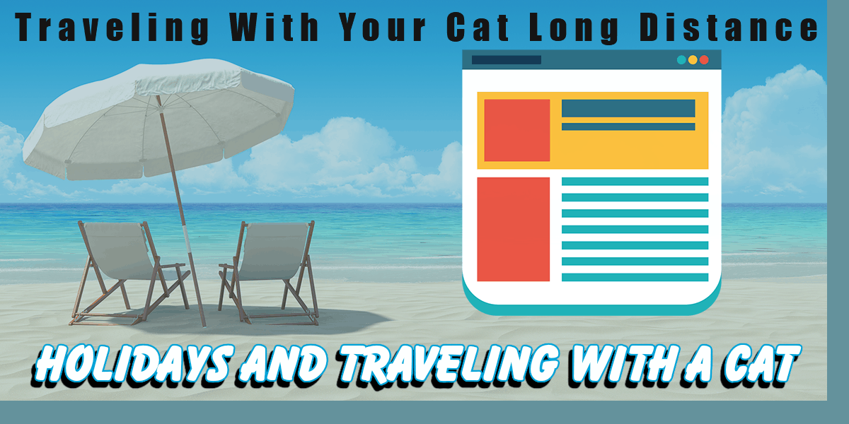 Travelling With Your Cat In The Car Long Distance