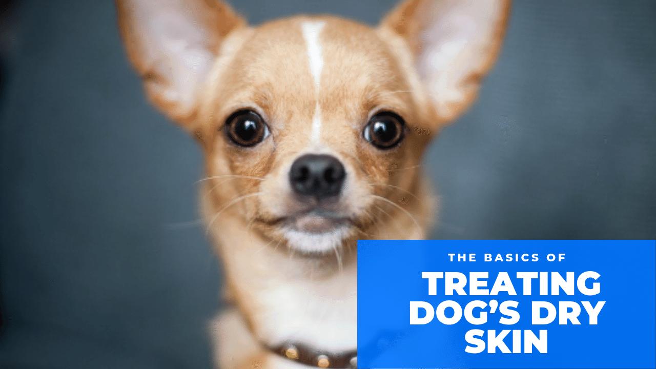 How To Treat Dog's Dry Skin