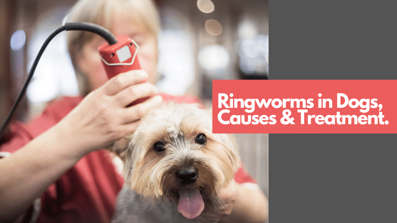 RINGWORMS IN DOGS CAUSES & TREATMENT