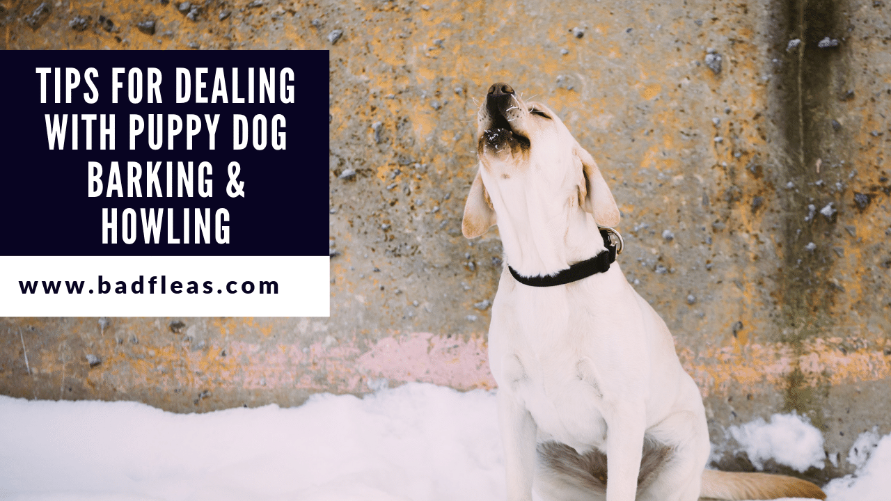 TIPS FOR DEALING WITH PUPPY DOG BARKING & HOWLING