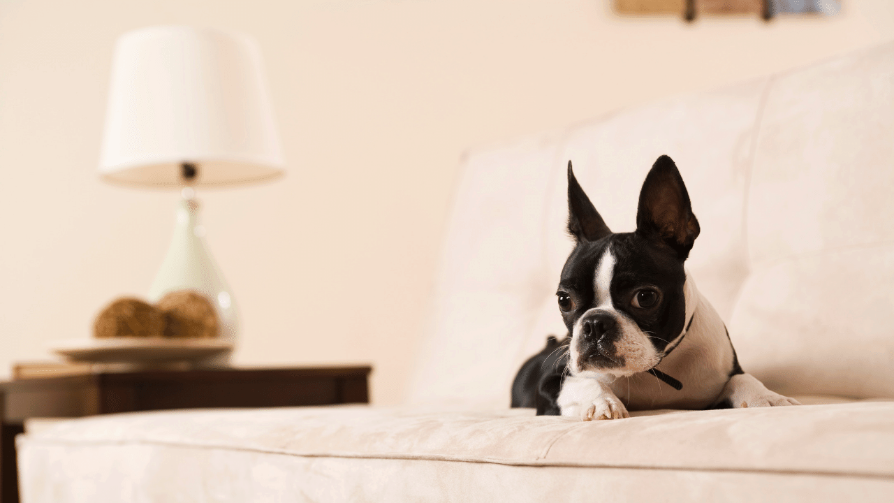 Best Oral Flea Treatment For Dogs