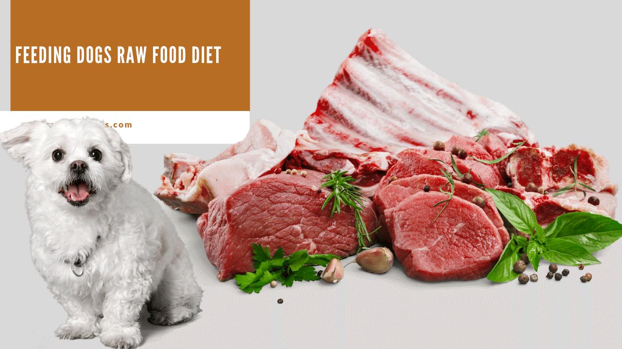 Feeding Dogs Raw Food Diet