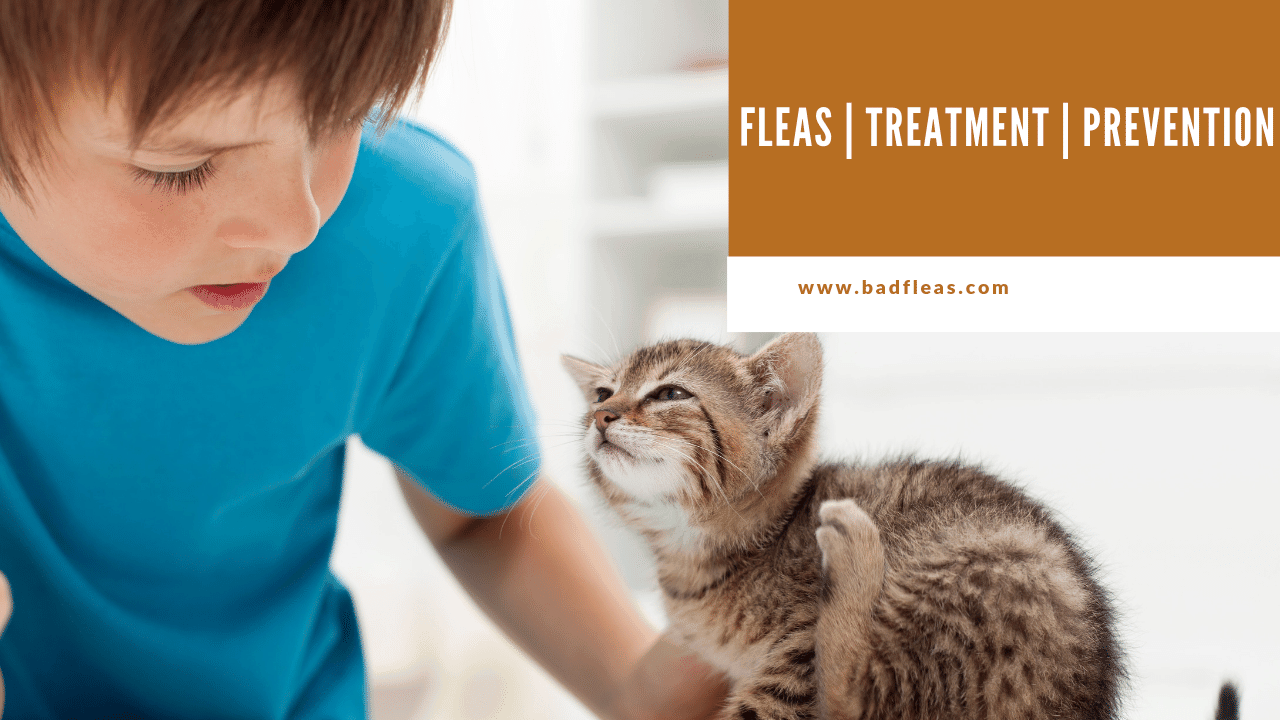 Fleas | Treatment |Prevention
