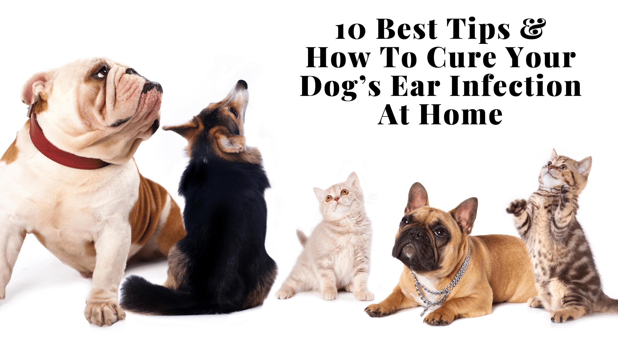 How Can I Cure My Dog's Ear Infection At Home?