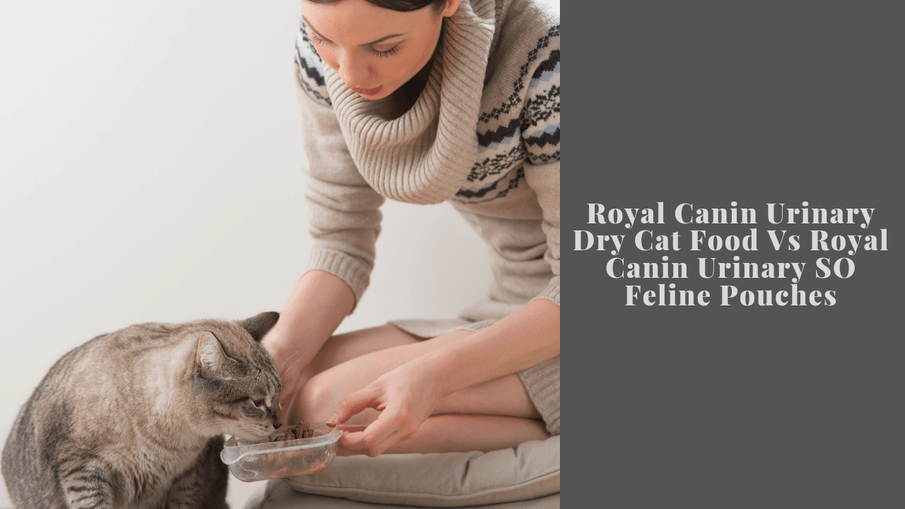 Royal Canin Urinary Dry Cat Food Vs Royal Canin Urinary SO Feline Pouches