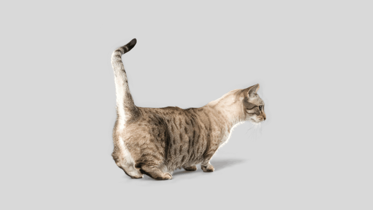 What can I give my cat to help her gain weight?