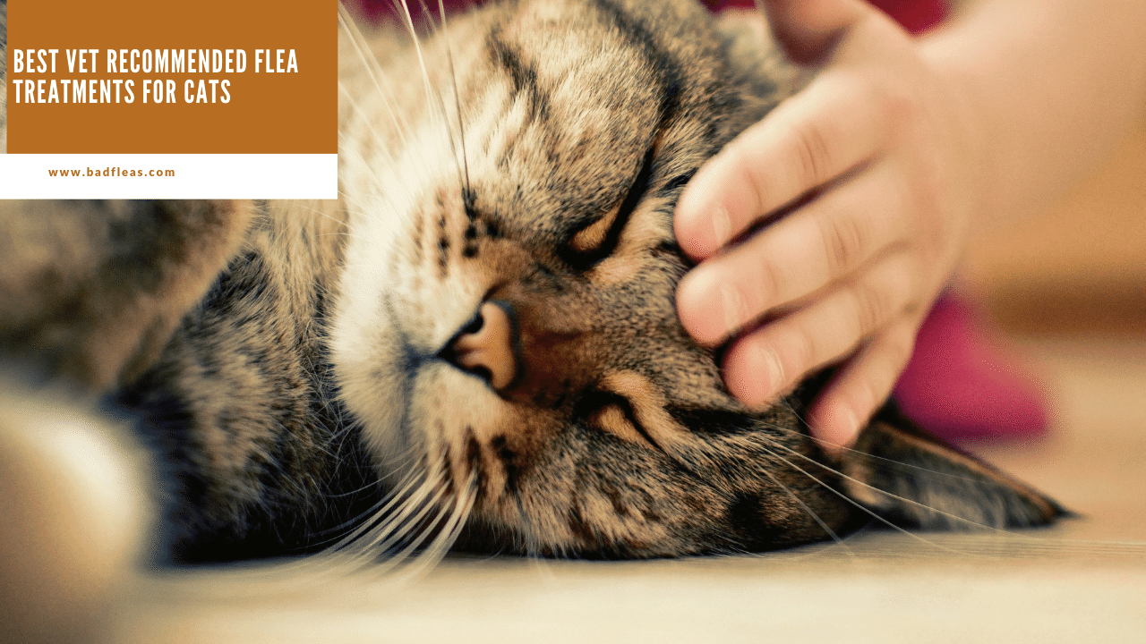 best vet recommended flea treatments for cats