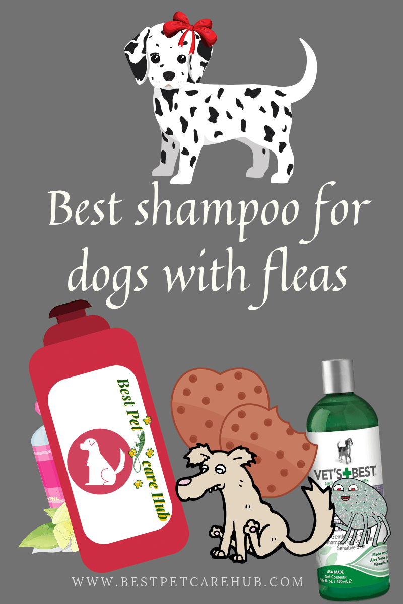 Best shampoo for dogs with fleas
