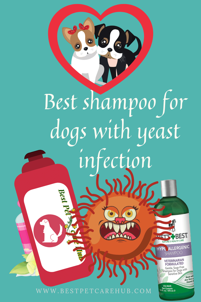 Best shampoo for dogs with yeast infection
