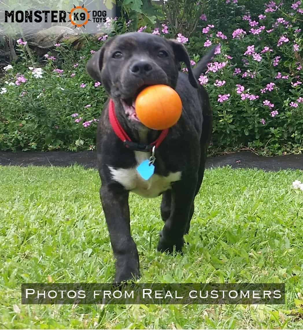 Indestructible Dog Ball - Lifetime Replacement Guarantee! - Tough Strong, 100% Non-Toxic Chew Toy, Natural Rubber Baseball-Sized Bouncy Dog Ball