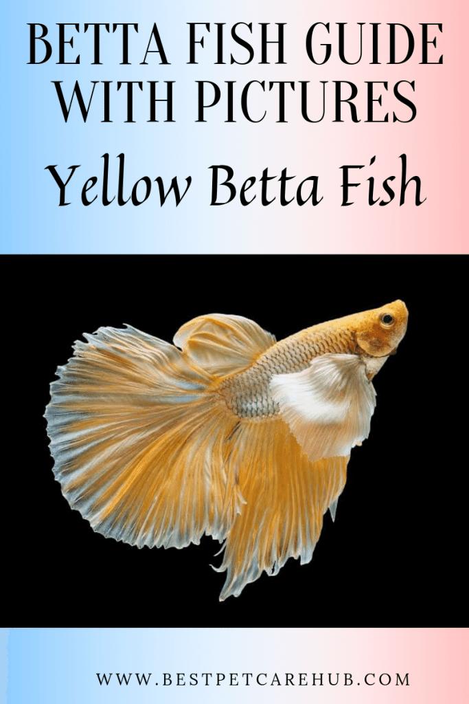 yellow better